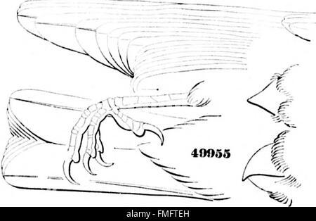 Una historia de las aves de América del Norte (microforma) - las aves terrestres (1874)