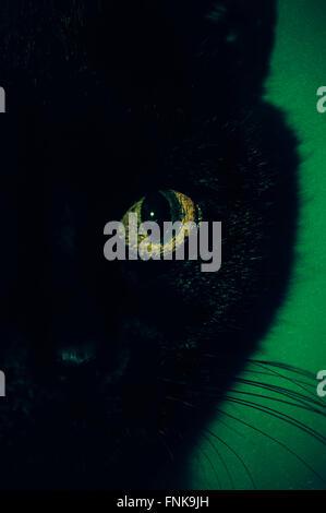 Cerca del ojo de gato negro Foto de stock