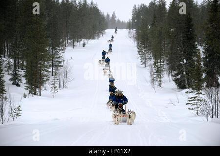Salla husky safari. En Laponia, Finlandia. Antes del safari nuestro guía le dará una lección de conducción y decirles cómo manejar el