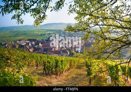 Colores otoñales en el Schoenenbourg viñedos encima de la histórica villa medieval de Riquewihr Route des Vins Alsace Francia