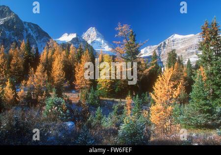 Parque Provincial monte Assiniboine en otoño, British Columbia, Canadá