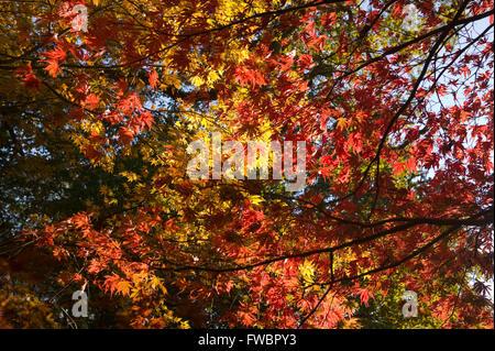 b99e02500 El intenso color rojo