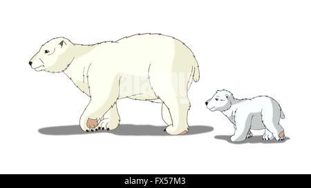 Oso Polar aislado sobre fondo blanco.