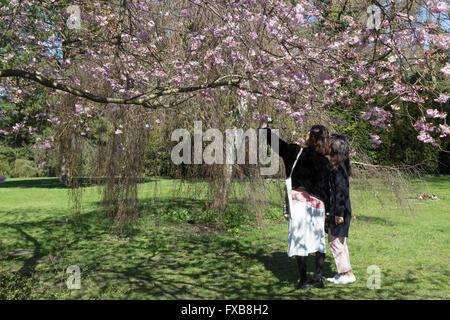 Copenhague, Dinamarca - 11 de abril de 2016: gente disfrutando de los cerezos en flor en Bispebjerg cementerio.