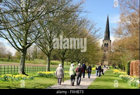 Narcisos línea un sendero que conduce a la Iglesia de Wentworth en Wentworth, una bonita aldea break en Rotherham, South Yorkshire, Reino Unido