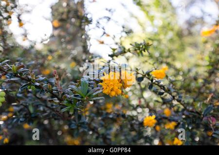 Londres, Reino Unido, 4 de mayo de 2016. Preciosa y soleada mañana en Parque Clissold, Stoke Newington, Hackney, Londres, Reino Unido. Copyright Carol efecto muaré/Alamy Live News