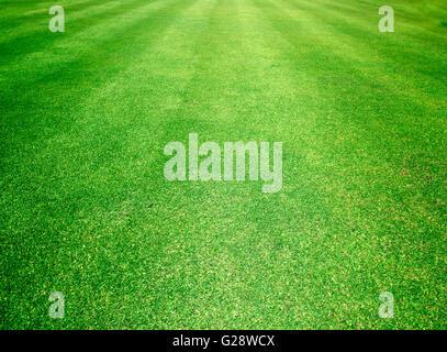 Campos de Golf de césped verde fondo de textura de patrón.