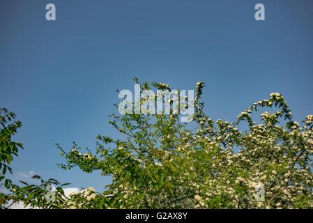 Hojas verdes brillantes en el sol Foto de stock