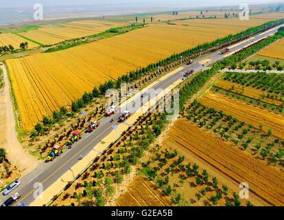 Yuncheng, la Provincia china de Shanxi. El 29 de mayo, 2016. Los campos de trigo son vistos en Yuncheng, en el norte Foto de stock