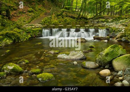 Durante el Shimna Stepping Stones River en Tollymore Park en Irlanda del Norte.