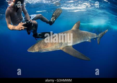 Buceador fotografiar un tiburón sedoso (Carcharhinus falciformis), Roca Partida, Colima, México