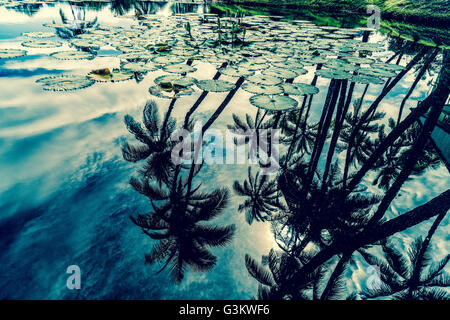 Palmeras reflexionando sobre agua con hojas de loto Foto de stock