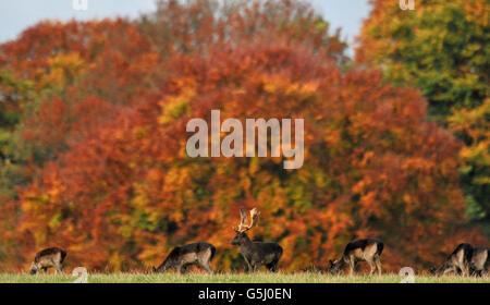 El clima de otoño 25 Oct.