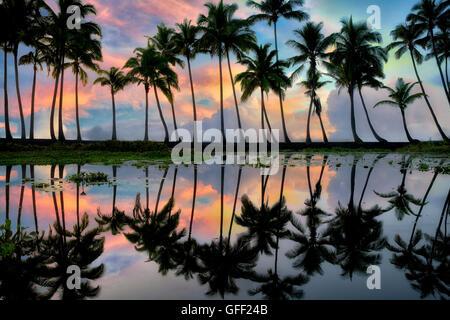 Palmeras en el estanque reflectante con amanecer. Playa de arena negra Punaluu. La Isla de Hawaii