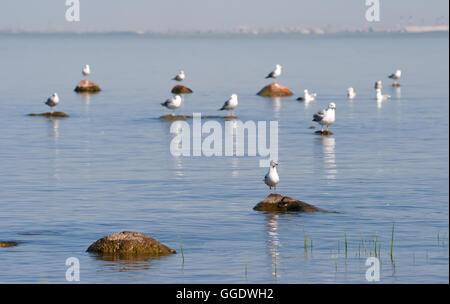 Las Gaviotas, sentado en las rocas en el mar y tomar el sol
