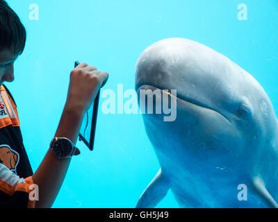Un niño interactúa con una falsa orca (Pseudorca crassidens) en el acuario de Vancouver en Vancouver, Canadá.