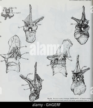 Boletín del Museo Histort Natural. Geología series (1996)