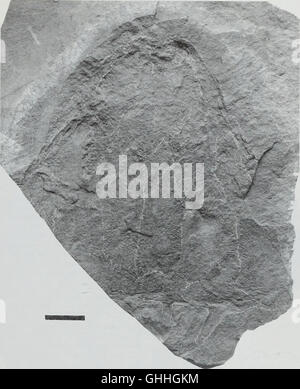 Boletín del Museo Histort Natural. Geología series (1998)