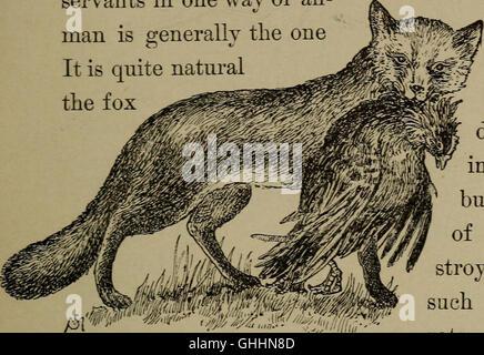 Conoce la vida en el campo y bosque; los animales, aves, ranas y salamandras (1898)