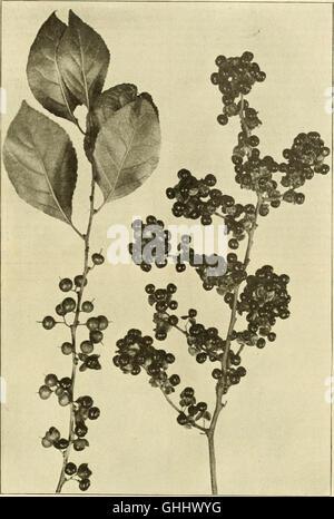 La florería americana - una revista semanal para el comercio (1901) Foto de stock