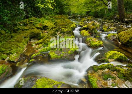 El Río Shimna en Tollymore Park en Irlanda del Norte.