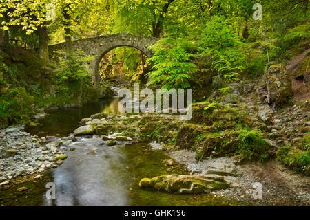 Foley's puente sobre el río Shimna en Tollymore Park, Irlanda del Norte. Foto de stock