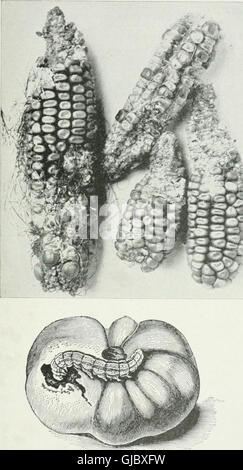 La Entomología Económica para el agricultor y productor de frutas - y para su uso como un libro de texto en las escuelas y colegios agrícolas (1906)