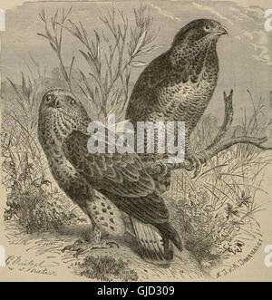 Clave para las aves de América del Norte. Contiene una reseña concisa de cada una de las especies de aves que viven y fósiles en la actualidad conoce desde el continente al norte de la frontera de Estados Unidos y México, incluido
