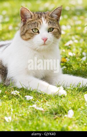 Es un gato en el jardín