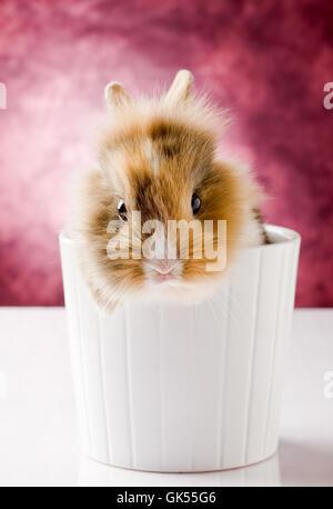 Dulce mascota animal