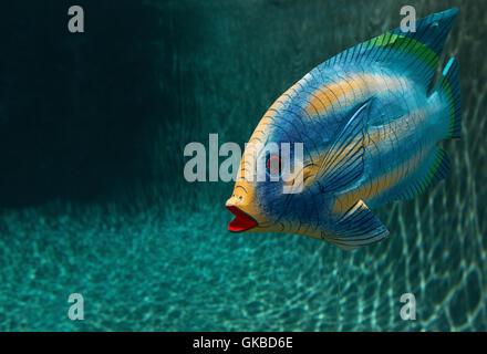 Madera de peces en una piscina en Virginia Beach, Virginia