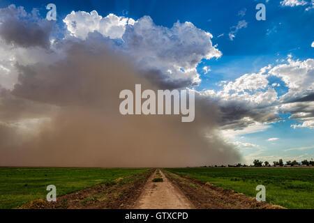 Monzón tormenta de polvo acercándose a Phoenix, Arizona