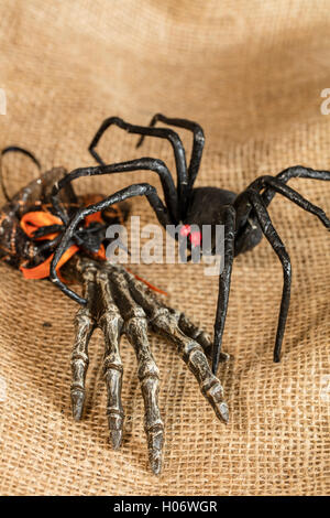 Araña viuda negra y decoración de Halloween Mano esqueleto Foto de stock