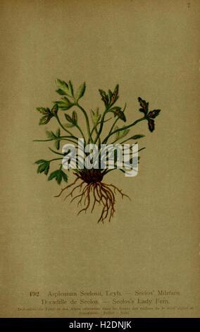 Atlas de la flora alpina (página 183)