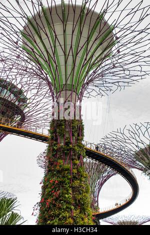 Singapur, jardines junto a la bahía, Supertree Grove, skyway OCBC paseo elevado