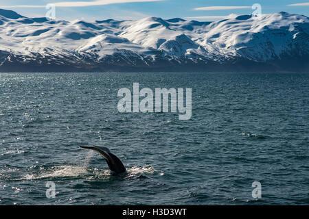 Ballenas nadando en el mar contra las montañas nevadas