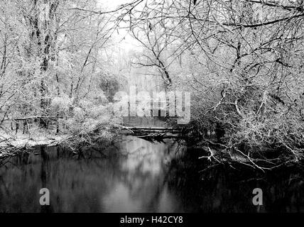 Bosque de invierno en Michigan