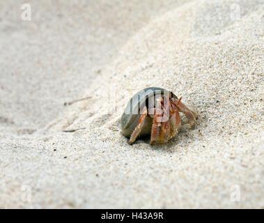 Playa, cangrejo ermitaño, Asia, Tailandia, fuera, fauna, cáncer, crustáceos, Asia sudoriental, animal, mariscos, playa, playa de arena,
