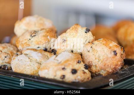 Una bandeja de caseros, bollos recién horneados, pasteles de rock que acaba de salir del horno y espolvoreado con azúcar Foto de stock