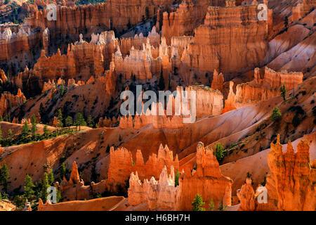 La roca (rojo y blanco) formaciones de roca brillan a lo largo de Queens Garden Trail en Bryce Canyon National Park Utah, EE.UU.