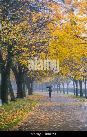 Aberystwyth, Gales, Reino Unido. 15 de noviembre de 2016. El clima del Reino Unido: una mujer camina por la arbolada Avenida Plascrug en un húmedo y brumoso mañana en Gales Aberystwyth. Se prevé que el clima más frío y windier get al final de la semana, poniendo fin a un hechizo de humedad y condiciones inusualmente apacible photo credit: Keith Morris/Alamy Live News