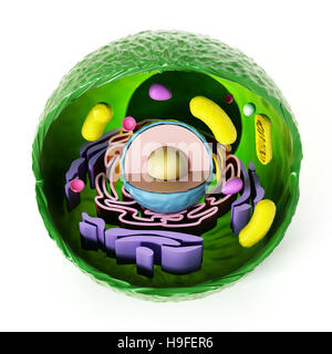 Anatomía de la célula animal aislado sobre fondo blanco. Ilustración 3D.