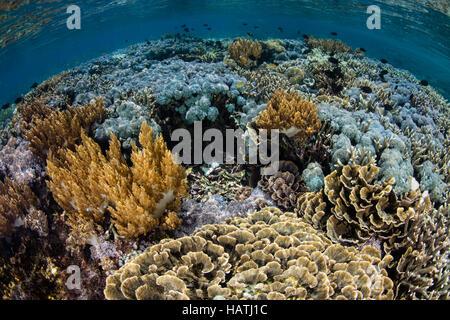 Un buen conjunto de corales crece en aguas poco profundas en el Parque Nacional de Komodo. Esta región es conocida por su alta biodiversidad marina.