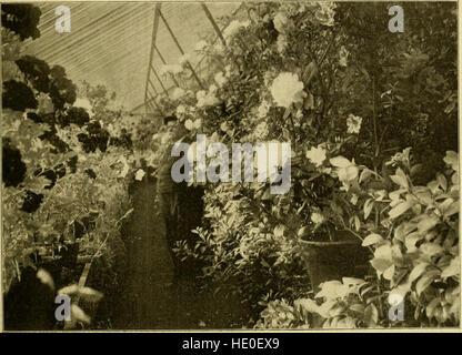 La florería americana - una revista semanal para el comercio (1902) Foto de stock