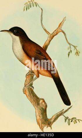 Las ilustraciones de la ornitología india - que contiene 59 figuras de nuevo, unfigured e interesantes especies de aves, principalmente desde el sur de la India (1847)