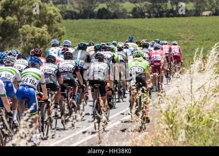 Adelaida, Australia. 17 de enero de 2017. Los ciclistas durante la etapa 1 del Santos Tour Down Under 2017. Crédito: Foto de stock
