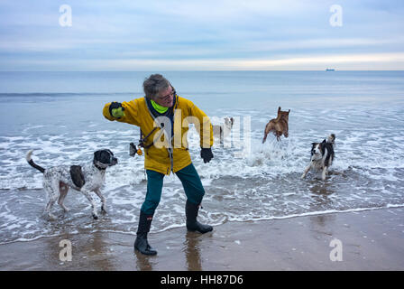 Hembra madura dog walker con un gran grupo de perros lanzando la bola hacia el mar. UK