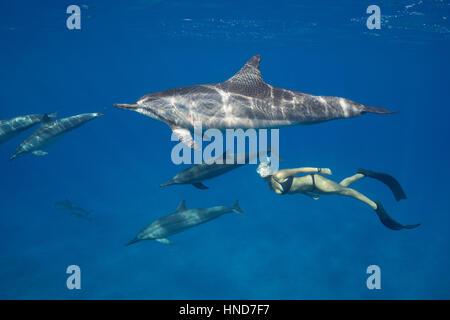 Emily Sepeta nadando con delfines Hawai o Grey's delfines, Stenella longirostris longirostris, Ho'okena Beach,Kona, Hawaii, EE.UU.