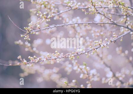 Árbol de flores flores Foto de stock