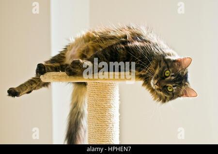 Gato Gato descansando sobre una torre